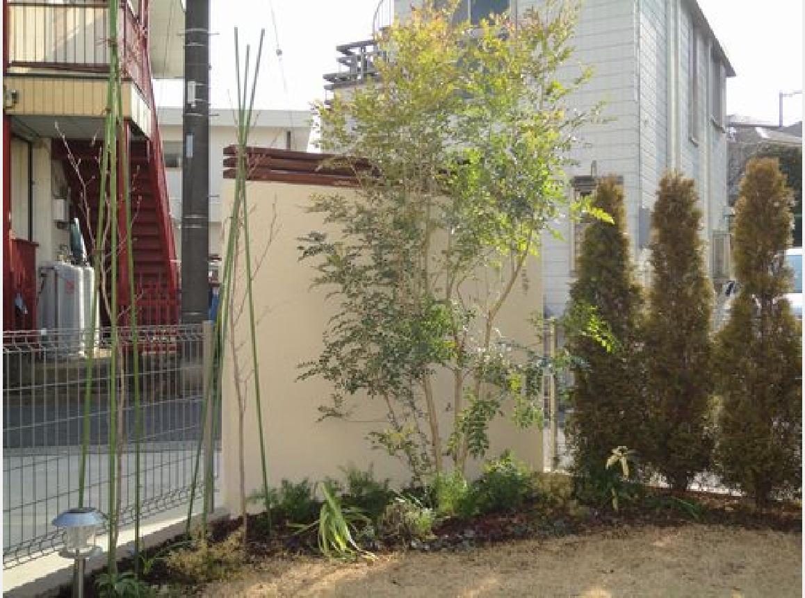 お庭には新規のシンボルツリー